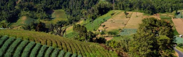 Cultures sur les pentes du volcan Empung à Sulawesi.  B. Locatelli © Cirad