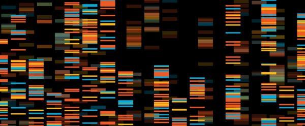 Visualisation de données génomiques © Adobe Stock
