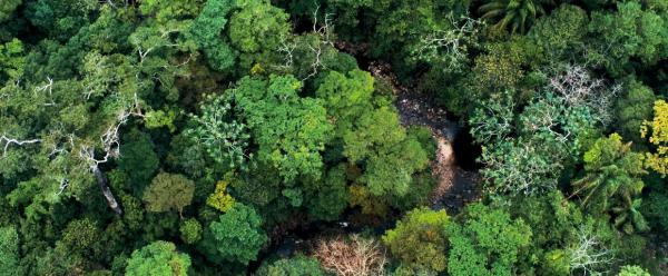 Vue aérienne de la forêt tropicale dans le parc national Amboro en Bolivie © simanlaci, Adobe Stock