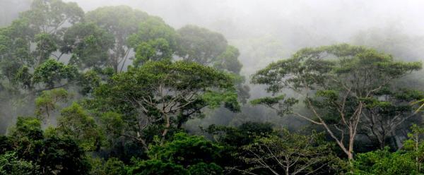Forêts de colline à Bornéo, Indonésie © P. Sist, Cirad