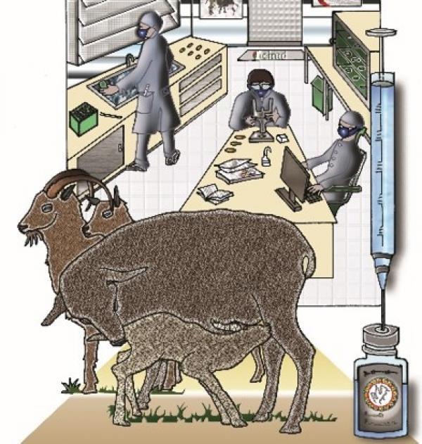 Peste des petits ruminants