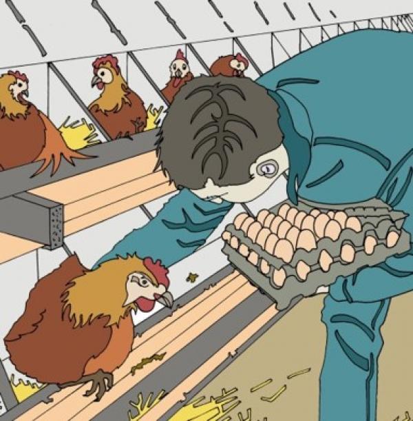 Systèmes d'élevage dans le monde