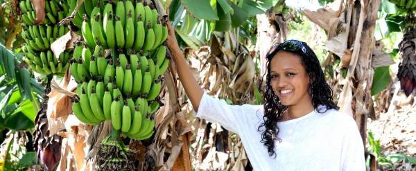 En Guadeloupe, le Cirad dispose d'une collection de bananiers unique au monde © Adobe Stock