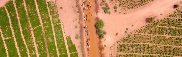 Sahel, drone view © J. Bourgoin, CIRAD