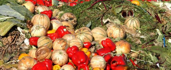 Les pertes et gaspillages alimentaires sont un sujet phare de la stratégie du Cirad © Eberhard, AdobeStock