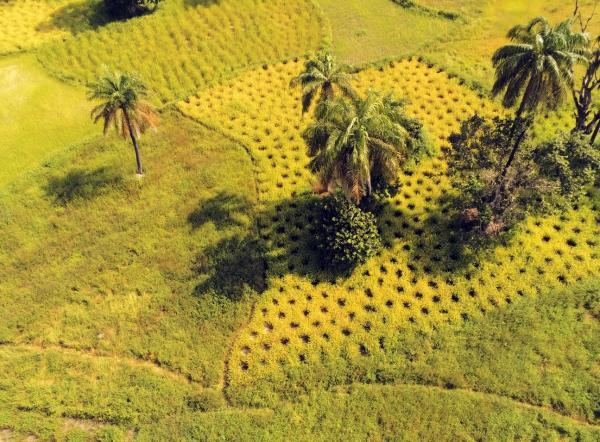 Rizières autour de Kolda au Sénégal © S. Taugourdeau, Cirad