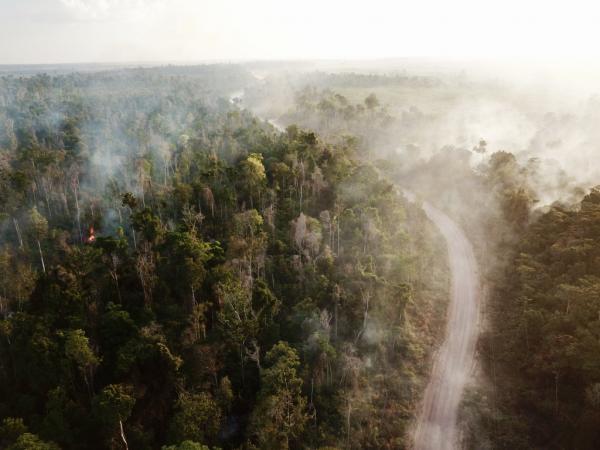 La déforestation et les atteintes à la biodiversité sont sources de contacts entre l'humain et l'animal, et de nouvelles émergences de maladies. © C. Bourgoin, Cirad