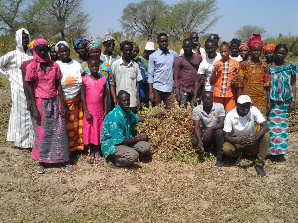Récolte d'une évaluation participative en milieu paysan de variétés d'arachide, en collaboration avec une organisation de producteur (RESOPP) © Hodo-Abalo Tossim
