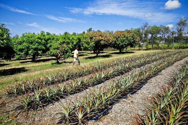Bases biologiques, techniques et agro-économiques pour la co-conception de systèmes agroalimentaires de qualité