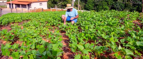 La crise de la Covid-19 met en exergue les fragilités de l'agriculture et des systèmes alimentaires dans plusieurs pays dépendant fortement des marchés extérieurs pour leur approvisionnement vivrier et en intrants © R. Almeida, AdobeStock