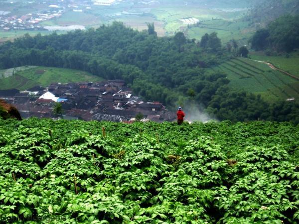 Face aux changements climatiques, la diversité génétique des cultures sert de rempart pour garantir la productivité et la résilience des systèmes alimentaires et agricoles © R. Bourgeois, Cirad