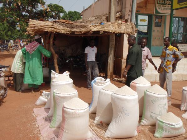 Soutenir la résilience et la modernisation des filières riz d'Afrique de l'Ouest, en favorisant l'accès des transformateurs au crédit, est l'une des principales recommandations des chercheurs de l'IRRI, d'AfricaRice et du Cirad © P. Mendez del Villar, Cirad