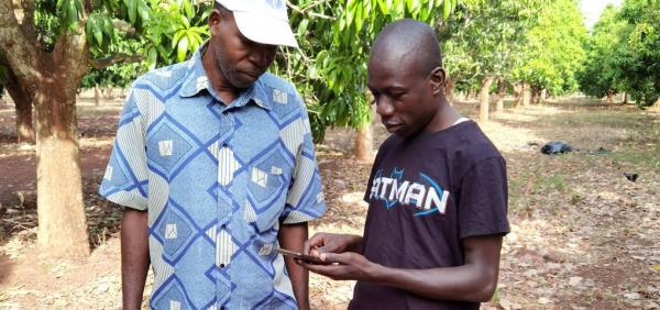 Test de l'application So Yield pour évaluer une prduction de mangue par la reconnaissance d'image © J.-M. Koffi, CNRA