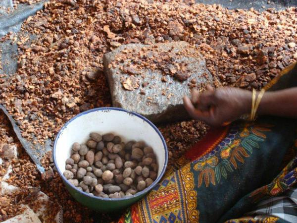 The BIOSTAR project will strive to recycle the by-products generated by the sector (oil cakes, pulp and shells) as a fuel, instead of the fuelwood traditionally used, which is not renewable © J. Blin, CIRAD