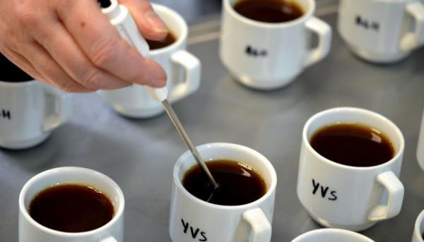 Dégustation de café © D. Mieulet, Cirad