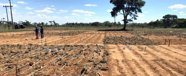 Des mesures d'albédo vont être réalisées au Zimbabwe sur ces parcelles en agriculture de conservation et en agriculture conventionnelle gérées par le CIMMYT © R. Cardinael