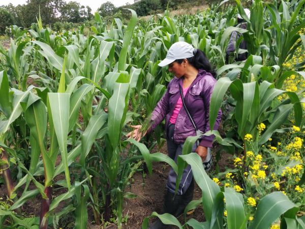 Les petits agriculteurs colombiens font habituellement face à de nombreuses difficultés pour accéder aux crédits. Ces contraintes ont été plus difficiles encore depuis le début de la crise liée à l'épidémie de Covid. © Fanny Howland