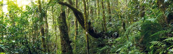 Natural rainforest, Kinabalu park, Malaysia © Mrfiza, Adobe Stock