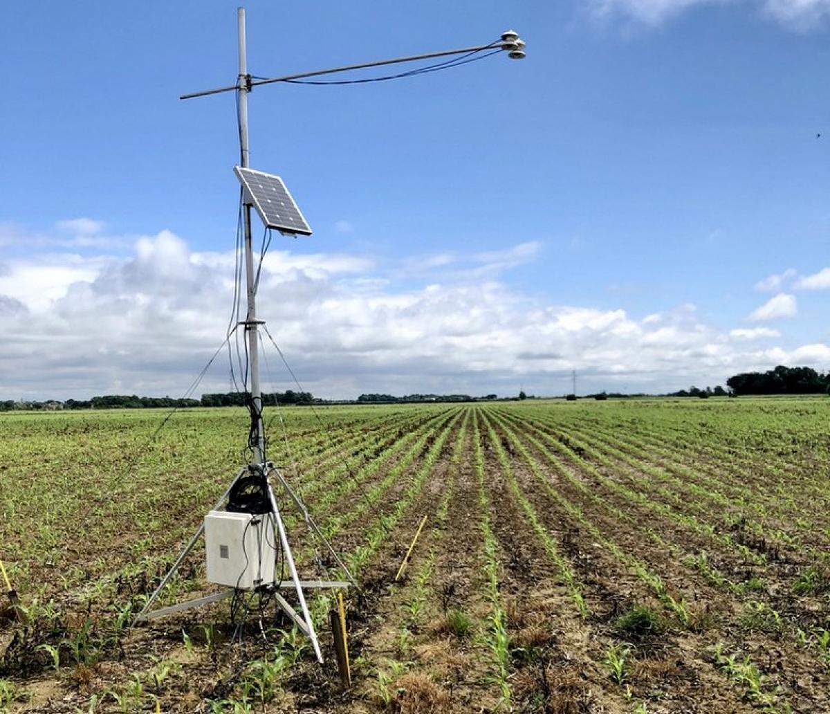 Mesure de l'albédo dans un champ de maïs en France © M. Ferlicoq