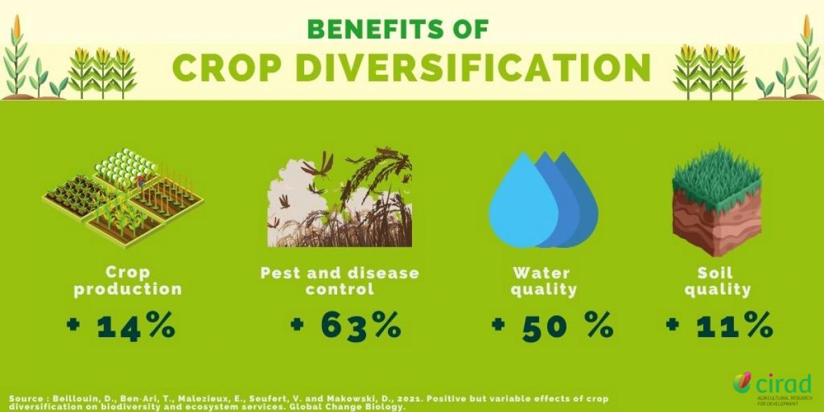Diversification culturale - infographie