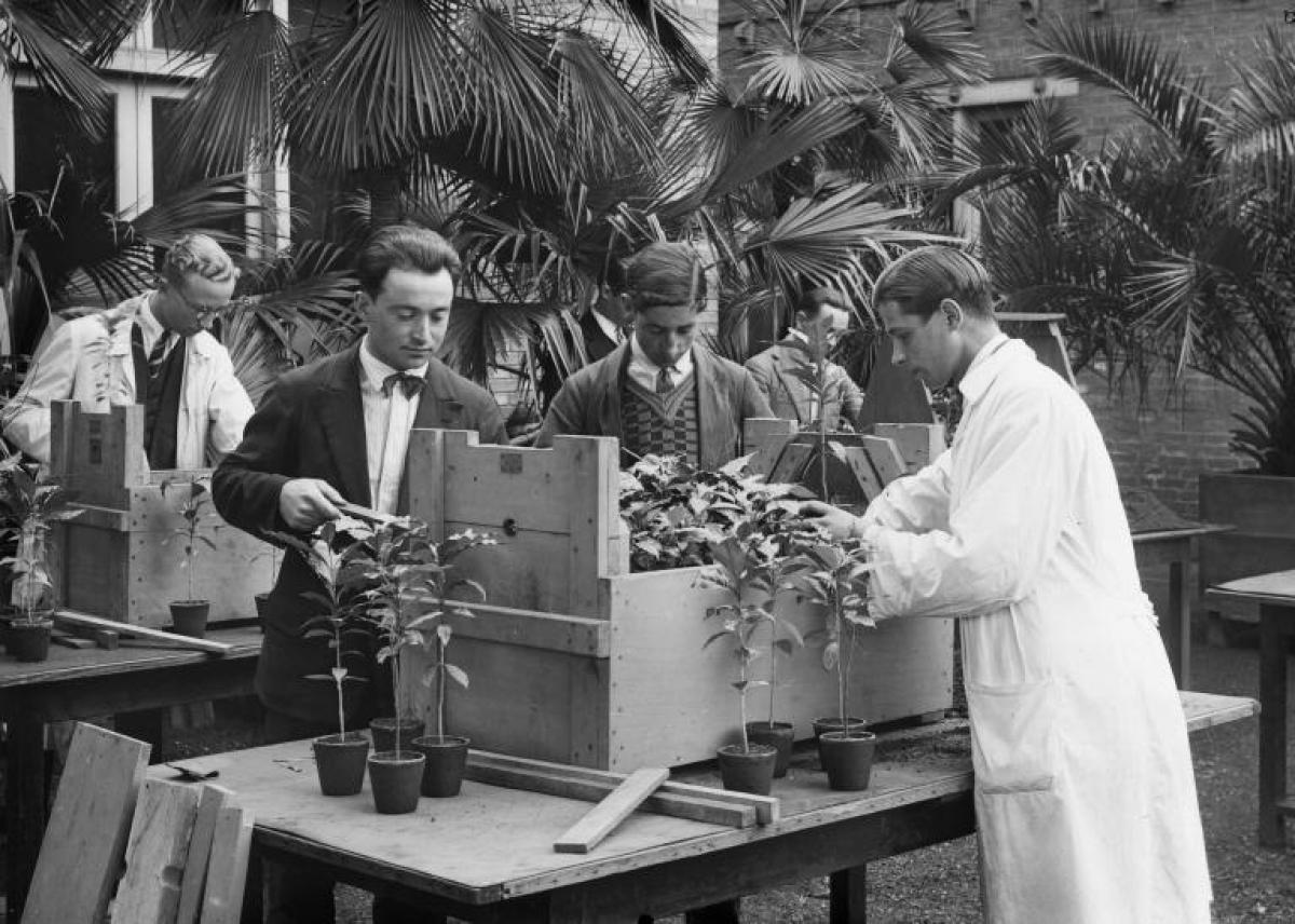 Practical work for students learning how to pack seedlings for long-distance shipping, 1929 © INAC