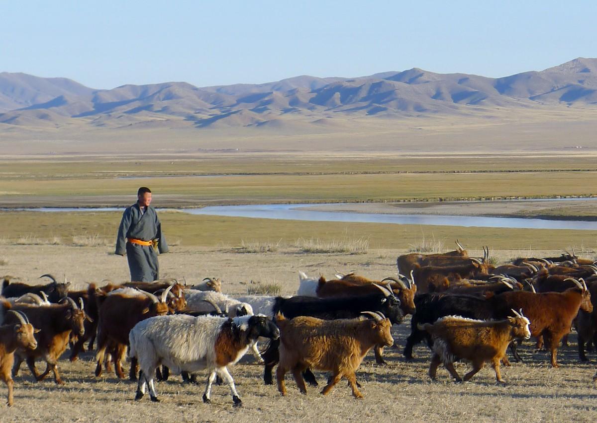 Pastoral farmer in Mongolia © A. Wane, CIRAD