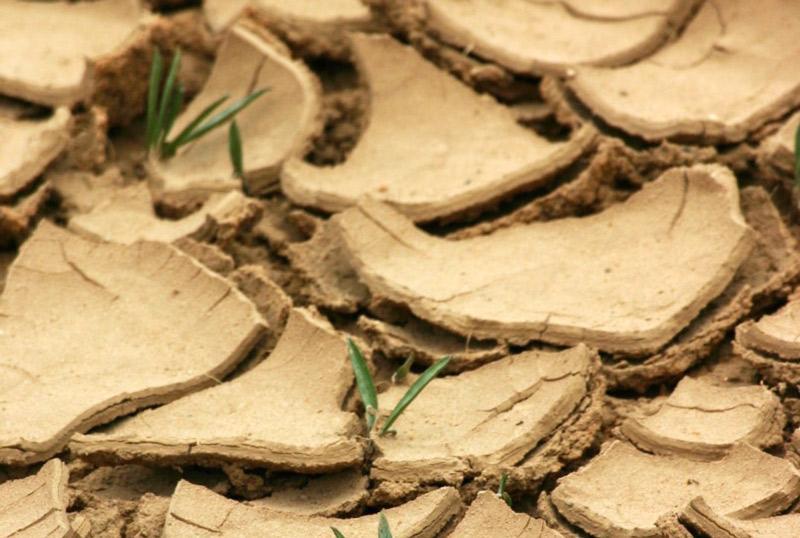 Cultiver plus de nourriture signifie également atténuer les effets du changement climatique © A. Rival, Cirad