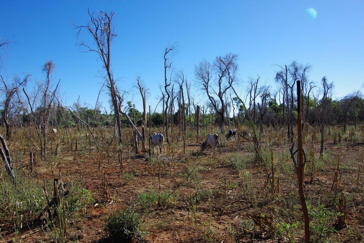 La pandémie Covid-19 et ses impacts économiques ont conduit à de nouvelles déforestations en zone tropicale © G. Vieilledent, Cirad