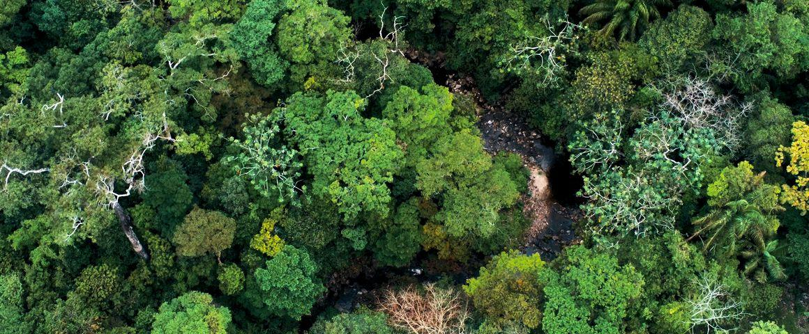 Aerial view of the tropical forest in the Amboro National Park, Bolivia © simanlaci, Adobe Stock
