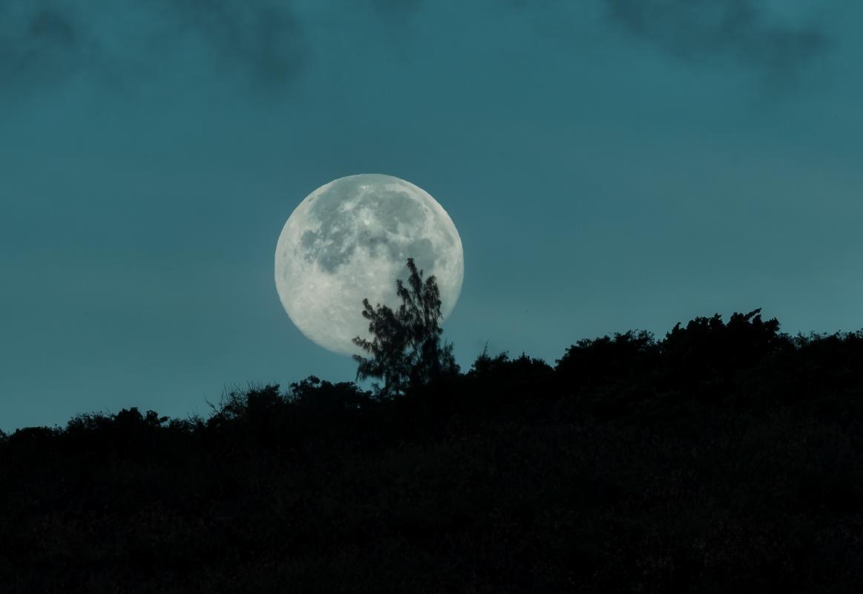 Une équipe scientifique, coordonnée par le Cirad, vient de démontrer l'effet de la lumière de lune sur l'expression des gènes du caféier. Photo Adobe stock © Michael