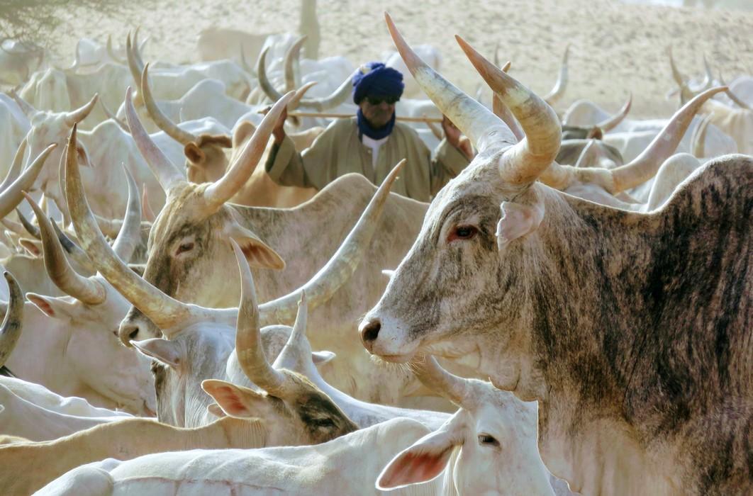 Éleveur dans le Ferlo (Sénégal) © S. Taugourdeau, Cirad