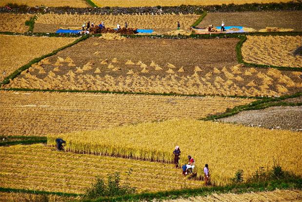 Family farming in Bhutan