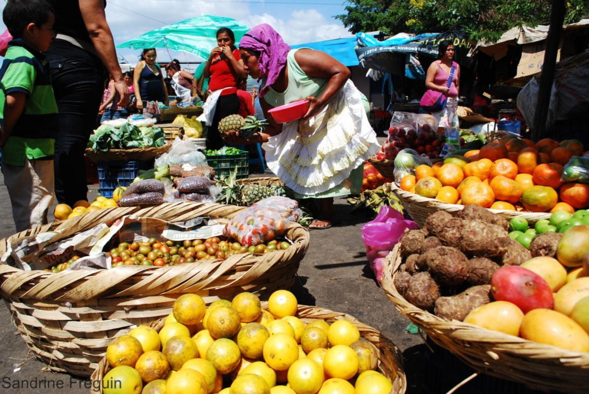 La pandémie de Covid-19 fragilise des systèmes alimentaires qui se trouvaient déjà « sur le fil du rasoir depuis des décennies », estime l'IPES Food © S. Fréguin, Cirad