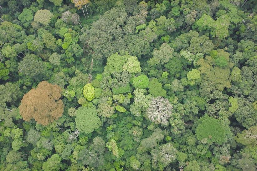 L'Afrique centrale abrite le second massif de forêt dense tropicale humide au monde, qui s'étend principalement sur cinq pays : Cameroun, Gabon, République du Congo, République démocratique du Congo et République Centrafricaine © E. Forni, Cirad