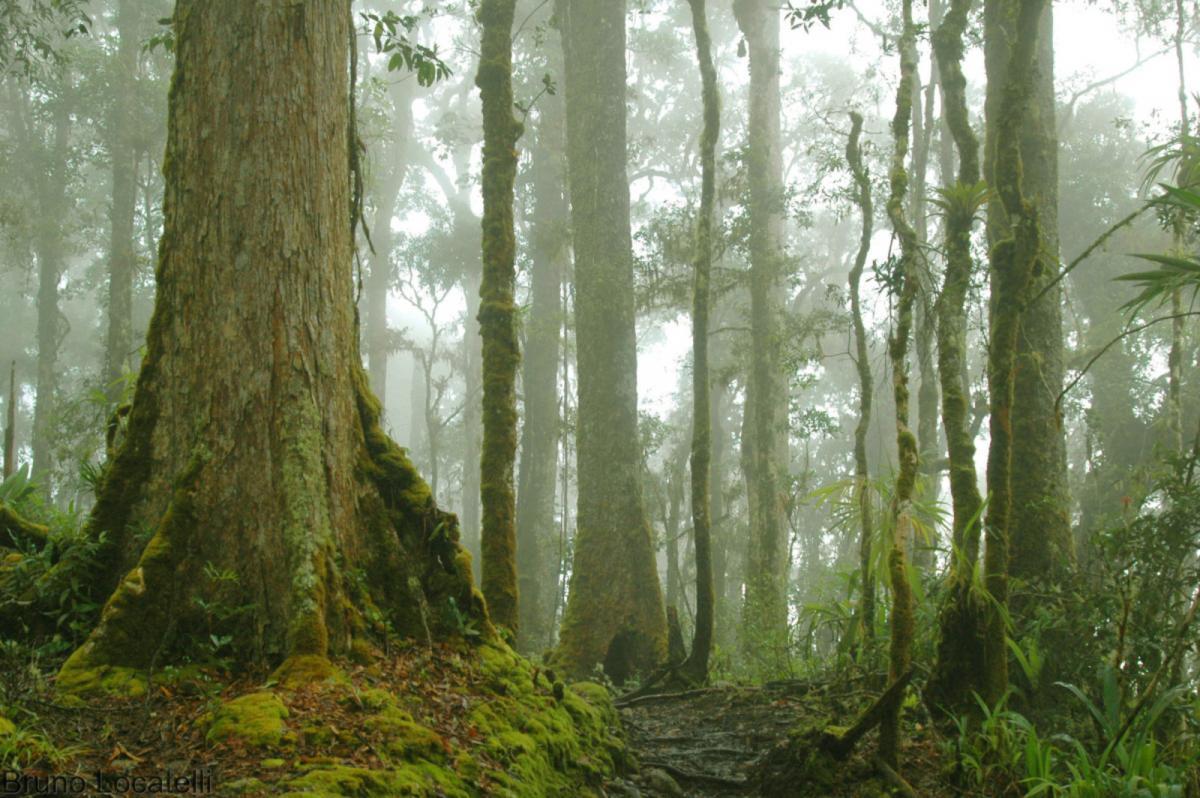 Que dit la science à propos des liens entre « forêt », « déforestation » et « maladie infectieuse émergente » ? Des chercheurs d'INRAE, du Cirad, de l'IRD et de l'Institut Pasteur de la Guyane ont analysé 565 articles scientifiques et viennent de publier leurs résultats dans Environmental Research Letters © B. Locatelli, Cirad