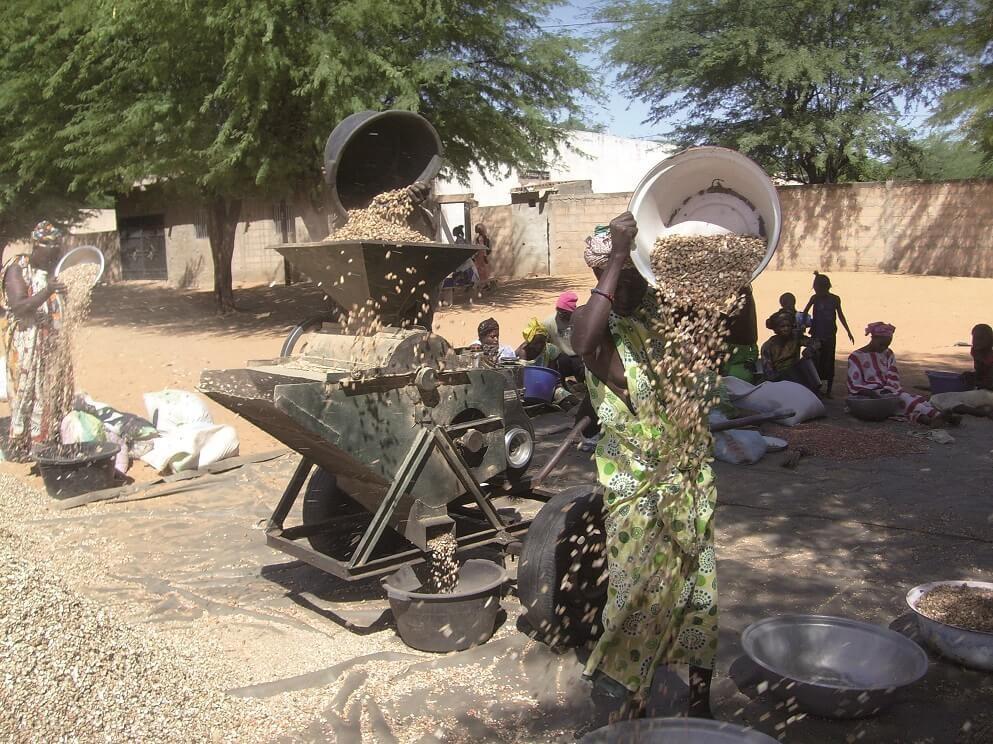 BioStar vise à améliorer l'approvisionnement énergétique des PME agroalimentaires d'Afrique de l'Ouest en convertissant leurs résidus en chaleur, force motrice ou électricité © D. Dia, Isra