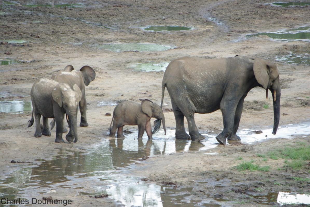 La crise sanitaire a mis en évidence la trop forte dépendance au tourisme international pour la conservation de la biodiversité africaine. © C. Doumenge, Cirad