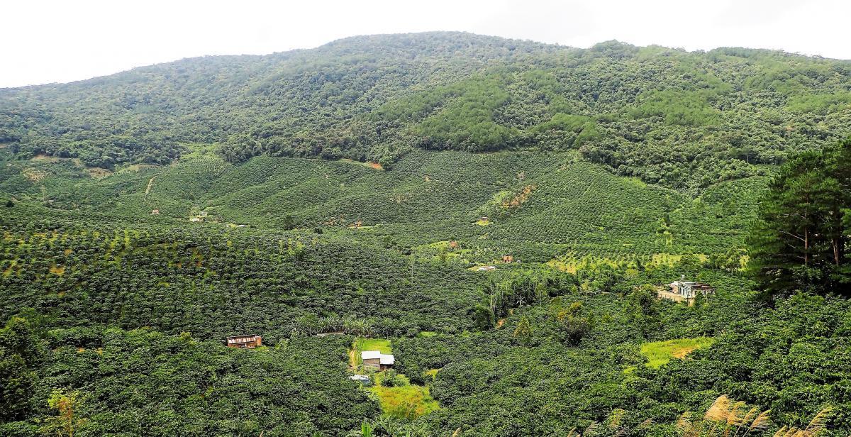 Culture du café et forêt naturelle au Vietnam © C. Bourgoin, Cirad