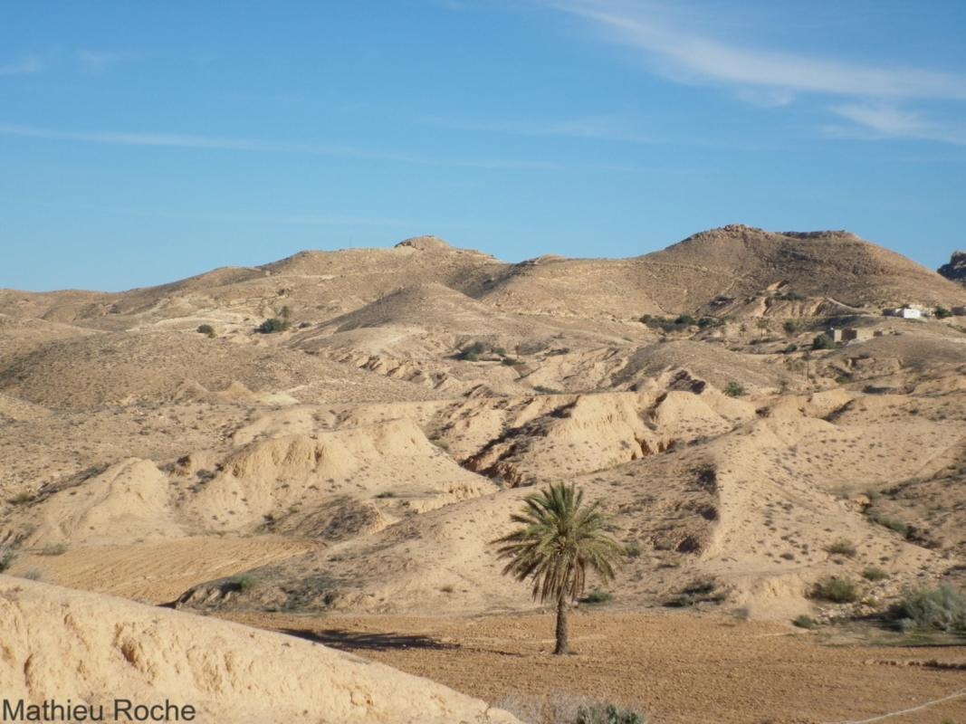 Arbre isolé dans le Sud tunisien. © Cirad, M.Roche