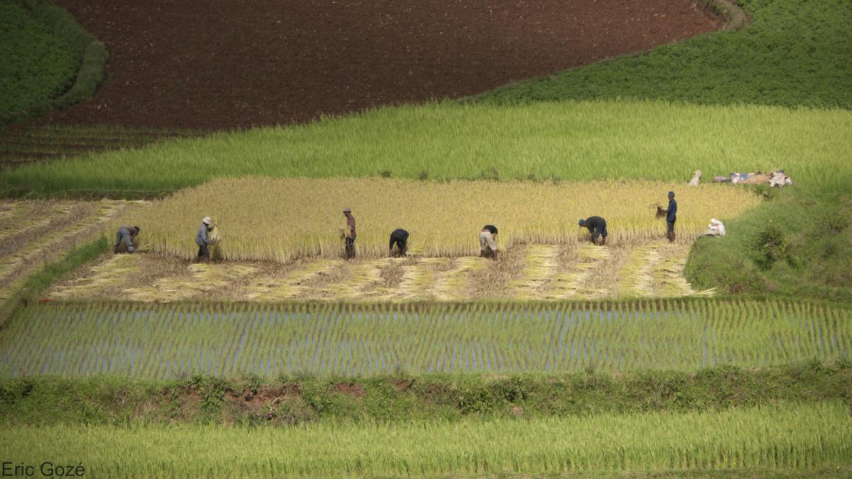 Agrimonde-Terra construit des scénarios pour explorer de nouveaux modèles agricoles © E. Gozé, Cirad