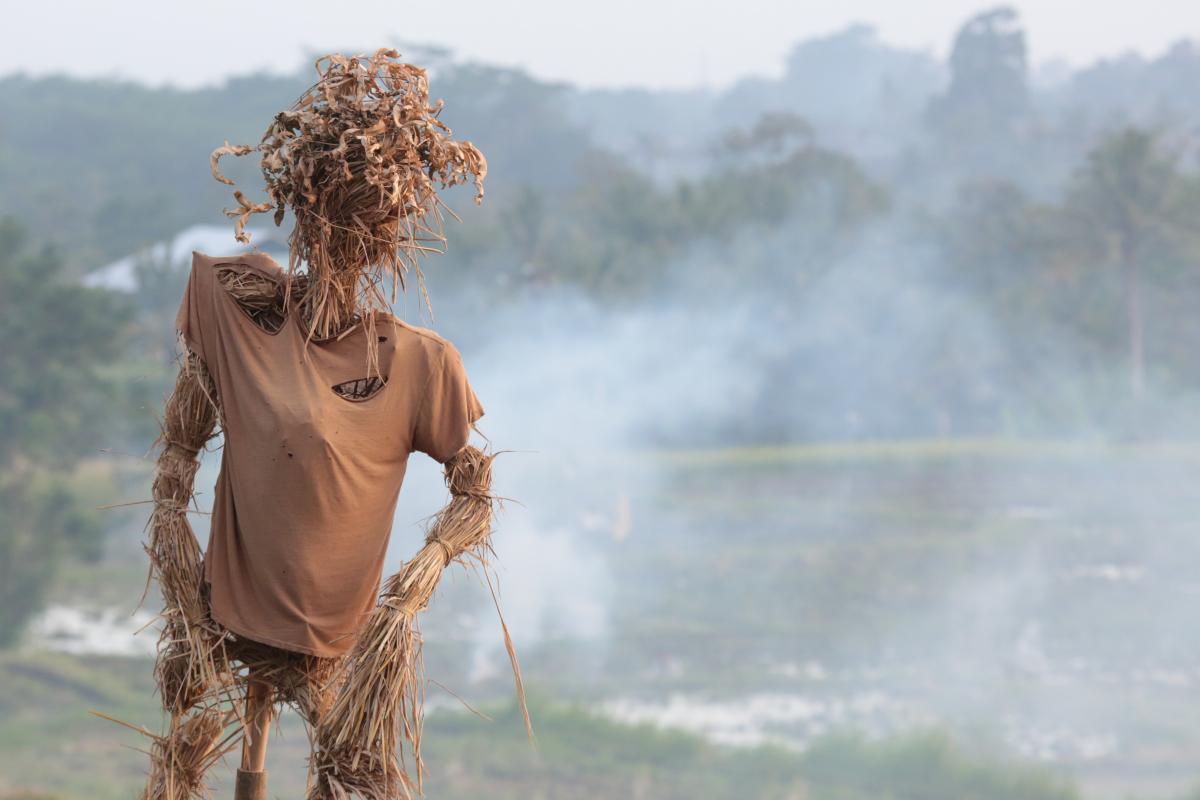 Après l'Amazonie et l'Afrique, l'Indonésie est à son tour la proie des flammes. En cause à Sumatra notamment : des pratiques traditionnelles de nettoyage agricole par les flammes © A. Rival, Cirad