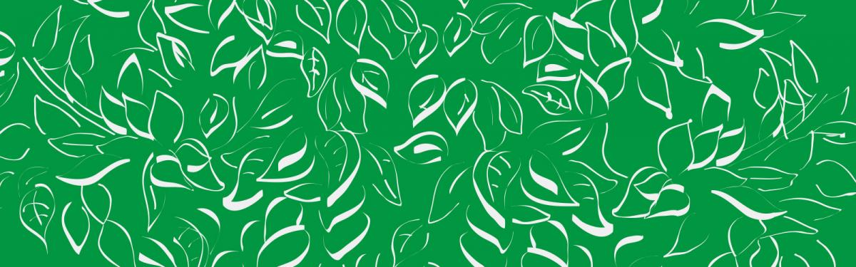 Feuillage vert