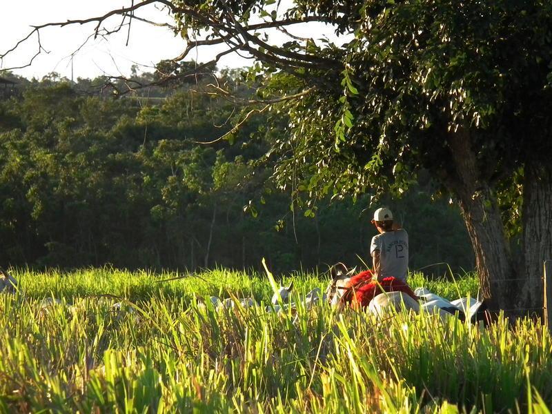 Alors que l'Etat du Para au Brésil accuse une hausse de 25 % de la déforestation en 2020, la commune de Paragominas, au coeur de cet Etat, rapporte les chiffres de déforestation les plus bas de son histoire. Là-bas, le Cirad et ses partenaires travaillent à développer une agriculture productive en harmonie avec les politiques de conservation de la forêt © R. Poccard-Chapuis, Cirad