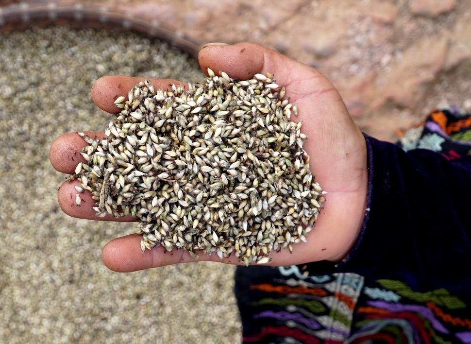 Une vaste étude coordonnée par le Cirad réhabilite le rôle des réserves alimentaires pour faire face aux famines et réduire la malnutrition chronique © Cirad, C. Dangléant