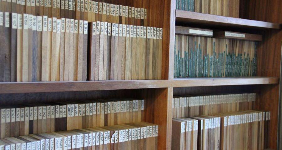 Xylothèque BioWooEB, échantillons, plaquettes de bois utilisées pour l'identification anatomique © Patrick Langbour, Cirad