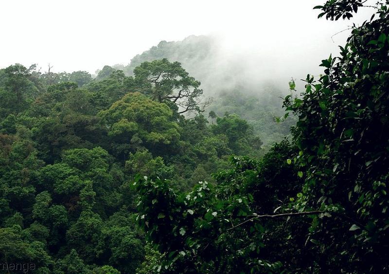 Forêt au sud-ouest du Cameroun © Cirad, C. Doumenge