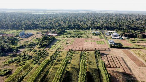 """Le campus de l'Embrapa, centre de recherche agronomique brésilien qui accueille le Cirad à Paragominas, effectue des essais en agroforesterie (premier plan) qui servent de démonstration aux agriculteurs. A l'arrière-plan, un bloc de forêt abimée par le feu a été restauré et sert de """"laboratoire"""" pour la gestion durable des ressources forestières © R. Poccard-Chapuis, Cirad"""