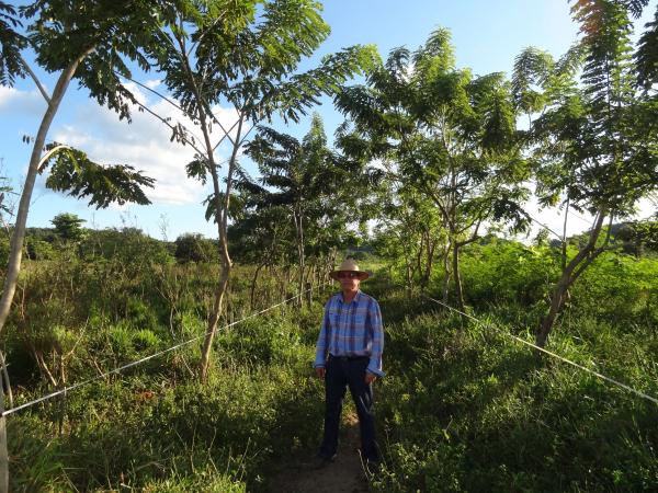 Les pratiques d'agroforesterie augmentent la fertilité de la terre, réduisent l'érosion des sols, boostent la pollinisation, créent des habitats pour la biodiversité, augmentent la séquestration du carbone, etc. Elles réduisent les risques d'incendies en saison sèche grâce à l'humidité injectée dans l'atmosphère par l'évapotranspiration © R. Poccard-Chapuis, Cirad