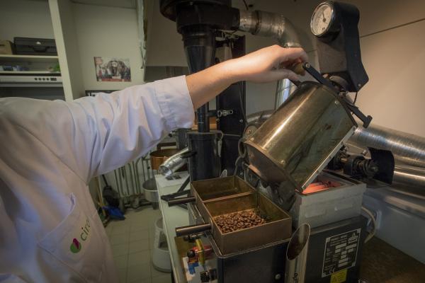 Les 3 espèces ont chacune été torréfiées selon 3 types de torréfactions pour que le café exprime l'ensemble de ses qualités aromatiques © C. Cornu, Cirad