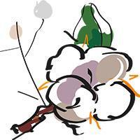 Cotton value chain illustration © Delphine Guard-Lavastre, CIRAD
